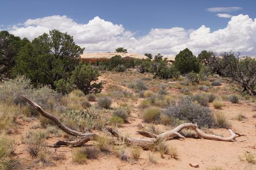 Ook tijdens deze korte trails veel verschillende landschappen