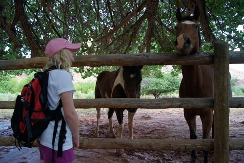 We kwamen vlak langs deze paarden