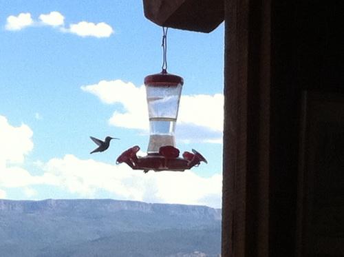 Eén van de twee kolibries