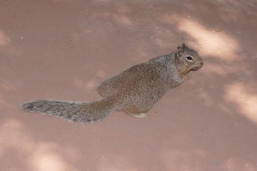 De betreffende squirrel