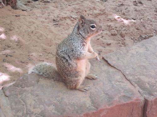 Ook hier squirrels