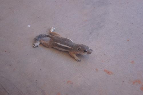 Ook hier weer squirrels...